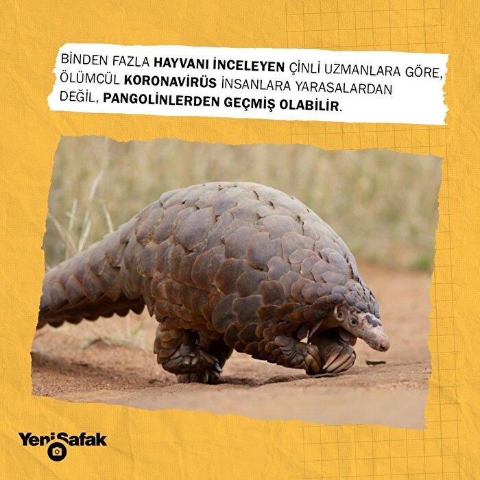 Koronavirüsün hangi hayvandan bulaştığı belli oldu