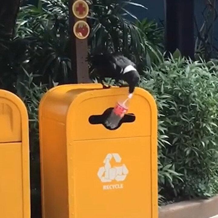Plastik şişeleri toplayıp çöpe atan karga