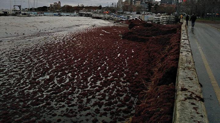 Caddebostan Sahilinde şoke eden görüntü: Kızıla büründü