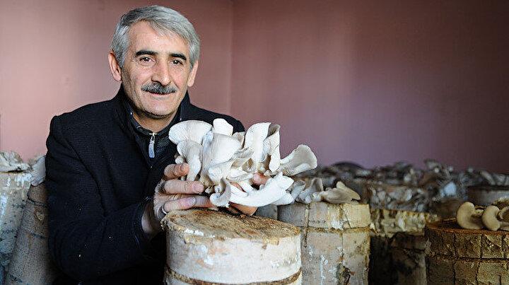 İstiridye mantarını yetiştirmek için apartmandaki dairesini üretim tesisi yaptı:  Bu işi ticari olarak sürdürmeyi düşünüyoruz