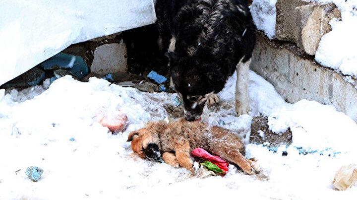 Dondurucu soğuklar 3 yavru köpeğin sonu oldu
