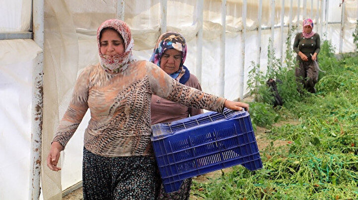 Onlar bayramı evde değil, serada geçiriyor: Türkiye için var güçleriyle çalışıyorlar