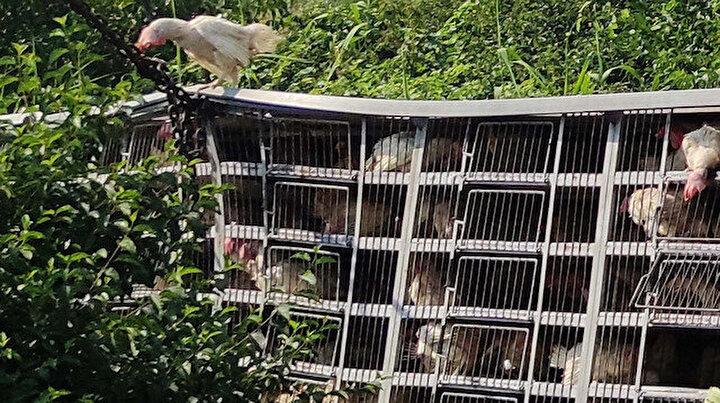 Şarampole yuvarlanan tavuk yüklü kamyonda bin tanesi telef oldu