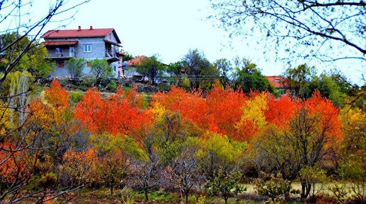 Gül diyarı Ispartanın saklı güzelliği: Sokaklardan bahçelere kadar her yerde renk cümbüşü yaşanıyor