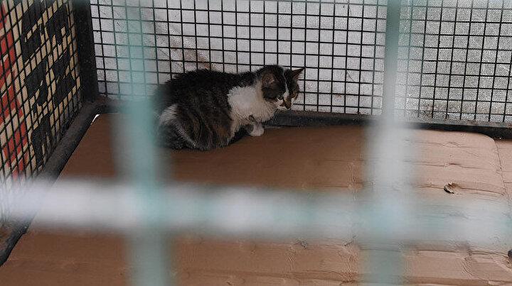 Sokak kedilerinde ölümcül ve bulaşıcı salgın tehlikesi: 10 günde öldürüyor