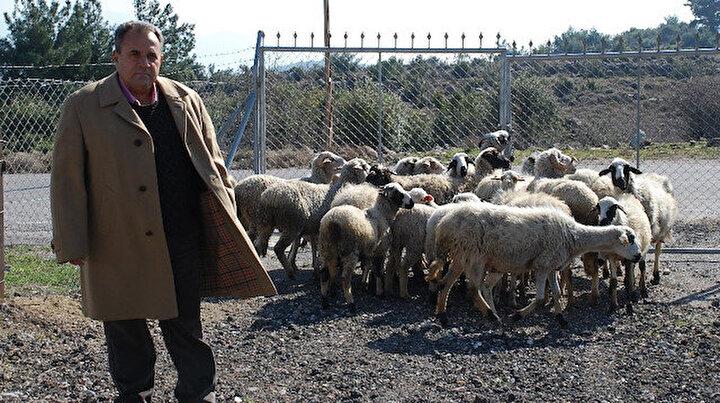 Keçi çobanı iş adamı oldu başarısını anlattı: Benimki keçi inadı dedi