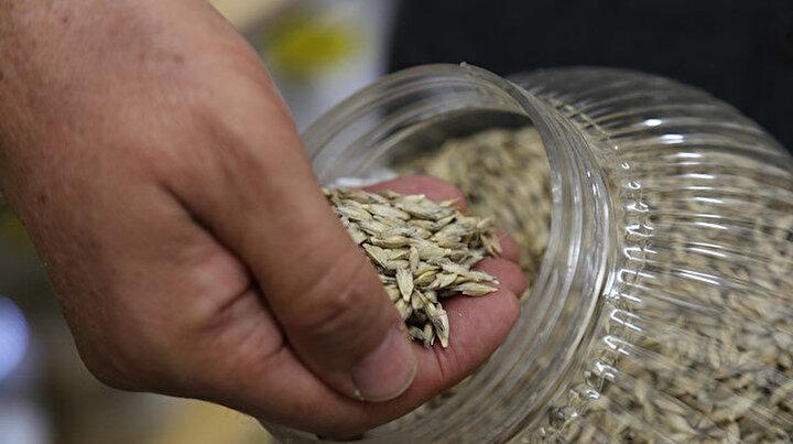 Türk bilim insanlarından büyük başarı: Buğdayın atası ızayı laboratuvarda ürettiler