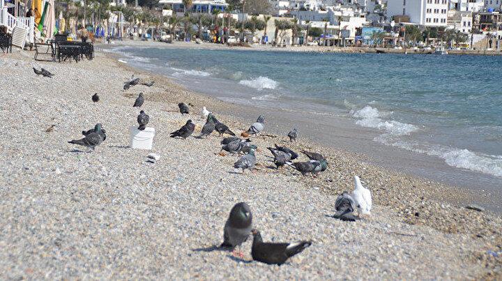 Bodrum kuşlara kaldı: Kısıtlamaya uyuldu her yer bomboş kaldı