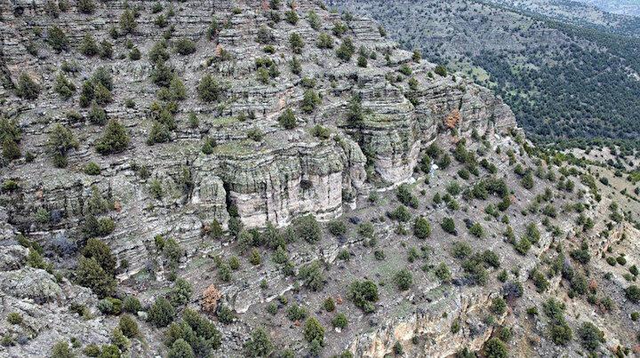 Türkiyenin ilk fosil ormanı: 19 milyon yıl öncesine yolculuk