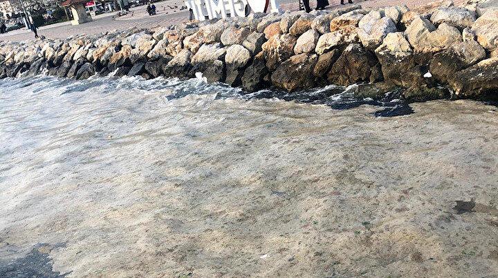 Gemlik sahili bembeyaz oldu: Görenler şaştı kaldı