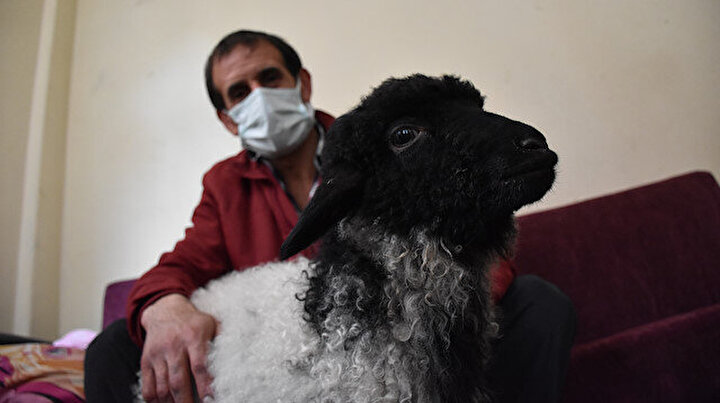 Veteriner bulamayınca kuzunu hastaneye getirip muayene ettirdi