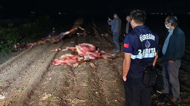 Adanada kan donduran görüntü: Atların kesildiğini görenler polisi aradı