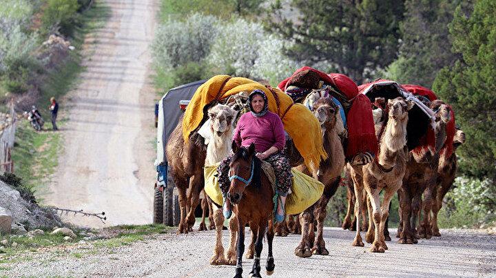 Yüzlerce yıllık geleneği sürdürerek develerle yolculuk yapıyorlar: 40 günlük göç başladı