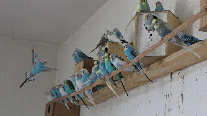Bu okulda muhabbet kuşu yetiştiriliyor: Yok satıyor