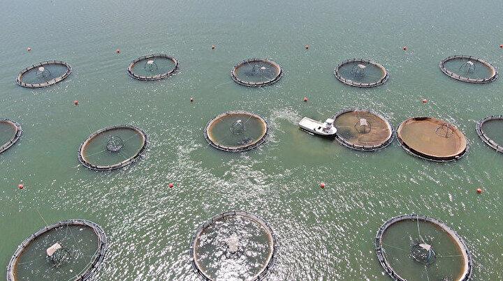 Denize kıyısı olmayan Sivastan dünyaya somon ihracatı
