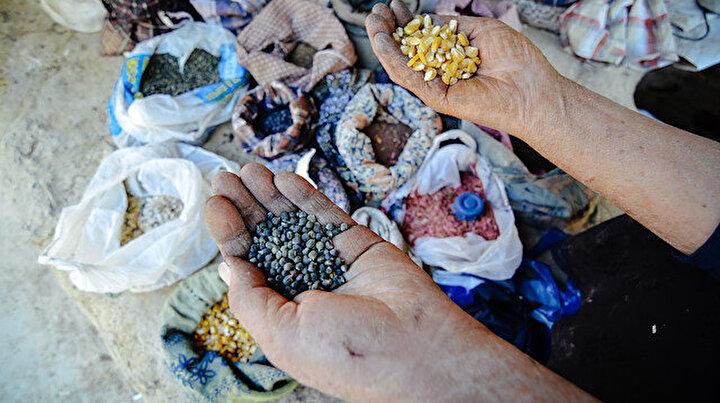 Ata tohumuyla başladıkları fide üretiminde talebe yetişemiyor: Bu tohumlar annem evlendiğinden beri var
