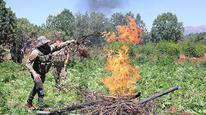 Diyarbakır'da uyuşturucu tarlalarına havadan karadan baskın: 2 buçuk milyon kök kenevir imha edildi