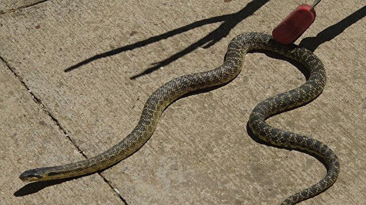 Afyonkarahisarda okul bahçesinde yılan paniği