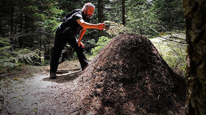 Uludağ'da dev karınca yuvaları: Görenleri hayretler içinde bırakıyor