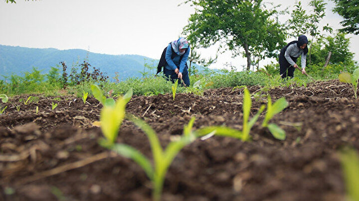 Kırsalın girişimci kadınları bu projeyle daha da güçlendi