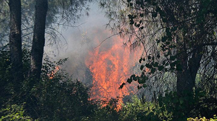 Serikte 3 noktada orman yangını: Havadan karadan müdahale edilen alevler kontrol altına alındı