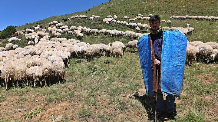 Tuncelili gencin büyük başarısı: Çobanlık yaparken Robert Lisesini kazandı sırada Tilburg Üniversitesi var
