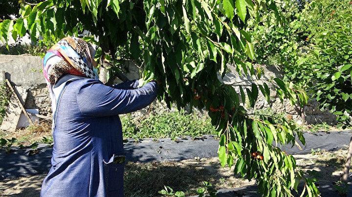 Hayır bahçesi: Burada meyveyi toplamak da yemek de ücretsiz