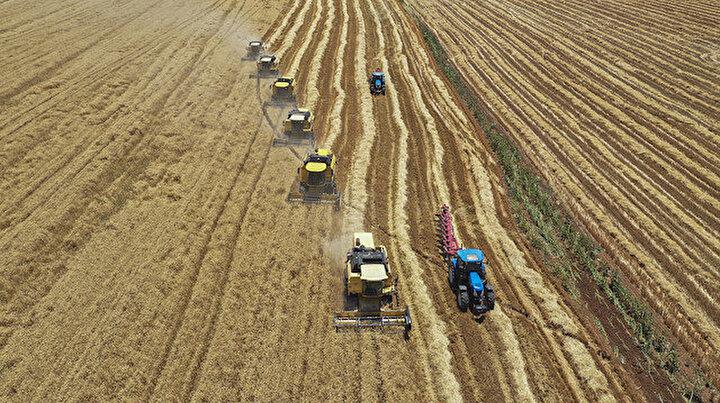 Türkiyenin en büyük hasadı: Yüzlerce biçerdöver aynı anda araziye girdi