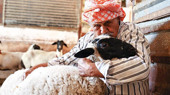 84 yaşındaki Ekrem amca 77 yıldır sakız koyunu yetiştiriyor: Birçok ilden talep görüyor