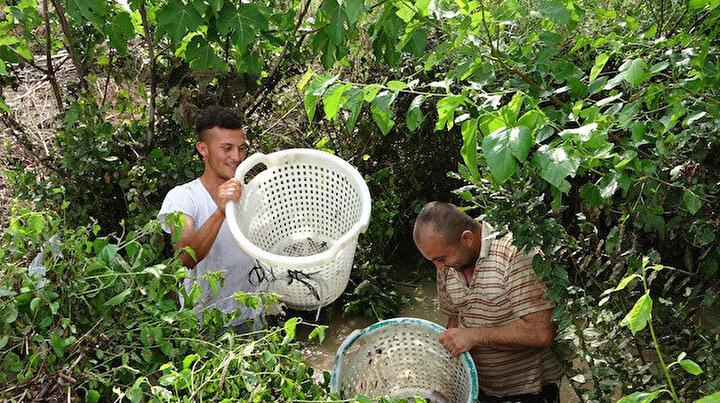 Vatandaşlar seferber oldu: Narenciye bahçesinde balık avı
