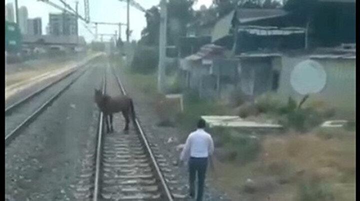 Vicdansızlar bunu da yaptı: Raylara bağlanarak ölüme terk edilen atı makinistler kurtardı