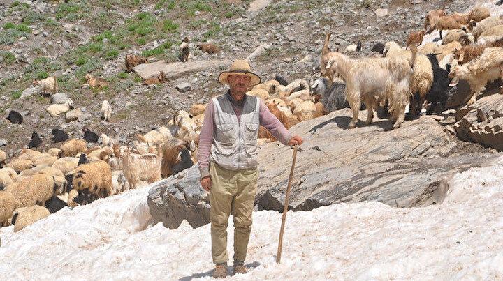 Haziranın sonunda burada karlar hala erimedi: Koyunların 3000 rakımda serinleme keyfi