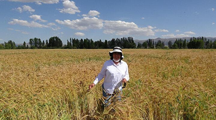 Ümrahanım Tritikalenin annesi buğday babası çavdar: Islah ettiği buğdaya kendi adını verdi