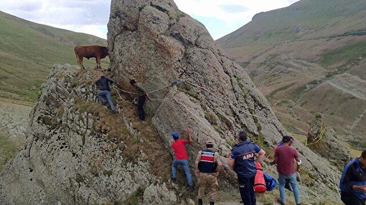 Kayalıklarda mahsur kalan inek için kurtarma operasyonu