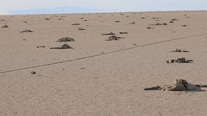 Tuz Gölünde kuluçkadan çıkan yüzlerce flamingo öldü