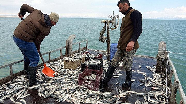 İnci kefalinde av yasağı bitti: Balıkçılar vira bismillah diyerek ağlarını attı