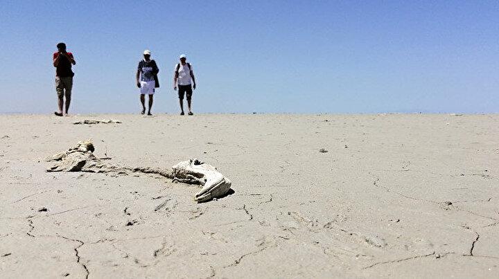 Flamingo mezarlığına dönmüştü: Artık Tuz Gölüne gelmeyebilirler