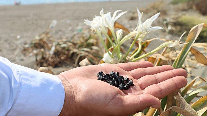 Bu çiçeği koparan yandı: Cezası 80 bin TL