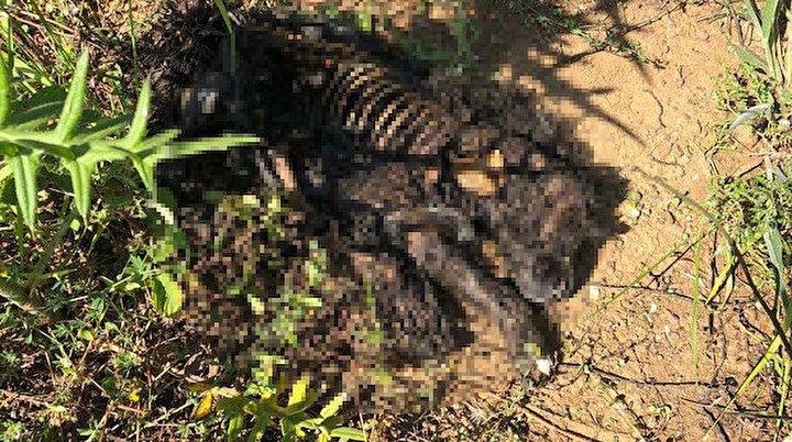 Görünen manzara dayanılır gibi değil: Yavru köpeği diri diri yaktılar