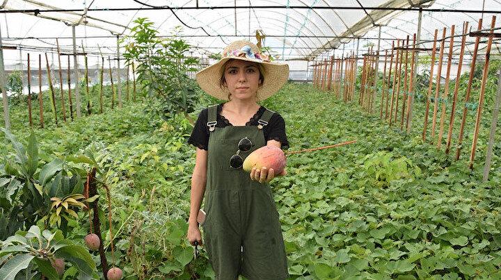 Üniversiteden mezun olup çiftçiliğe başladı ilk hasadını yaptı: Kilosu 40 liradan satılıyor