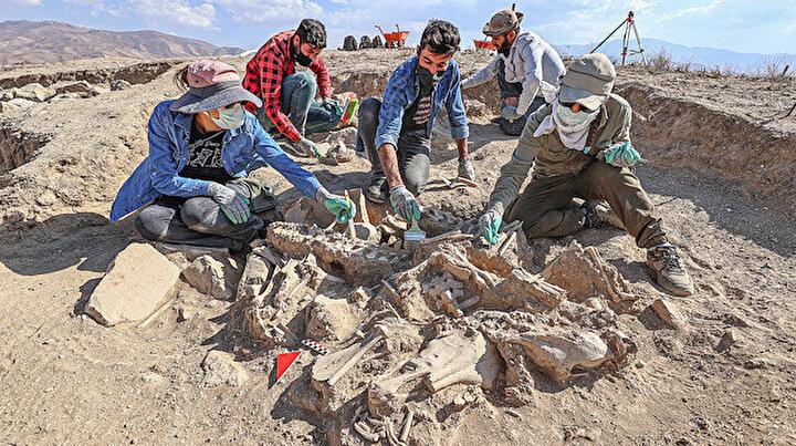 Vandaki kazılarda heyecan veren keşif: Köpeği, 4 atı, sığır ve koyunuyla gömülen Urartulu yönetici mezarı bulundu