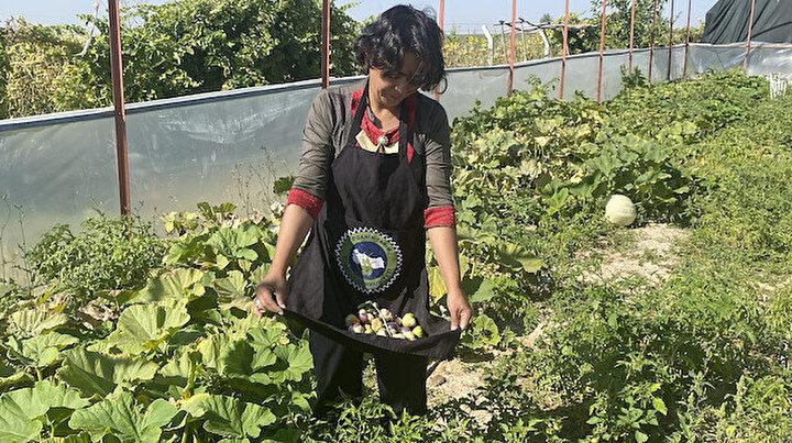 Kadın girişimci tohumunu Çinden getirtti üretime başladı: Yılda 150-200 bin lira arasında kar kalıyor