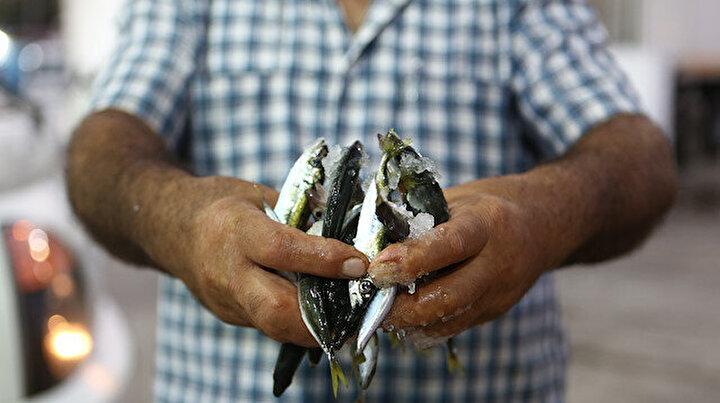 Balıkçılar vira bismillah dedi: Trabzonda istavrit bolluğu yaşandı