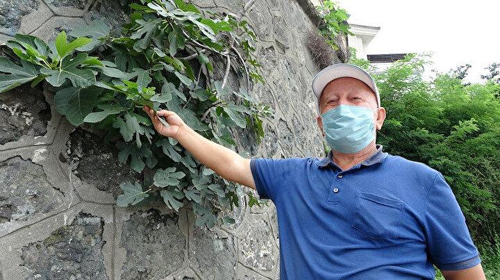 İstinat duvarını delen meyve ağacı görenleri şaşırtıyor: Bu Allah'ın kudreti ile olur