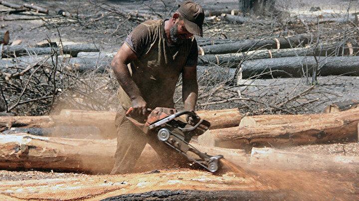 Muğlada yanan alanlarda kesim çalışmaları başladı: Fidan dikimine hazır hale getirilecek