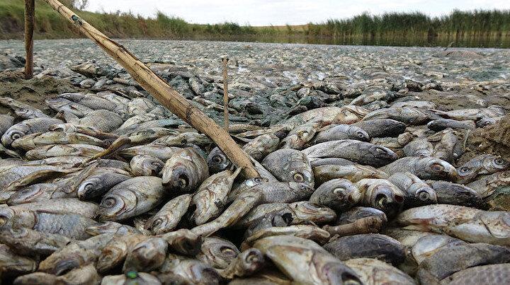 Kırklarelide çevre katliamı: Gölette binlerce balık öldü, kirleten işletmeye 96 bin lira ceza kesildi