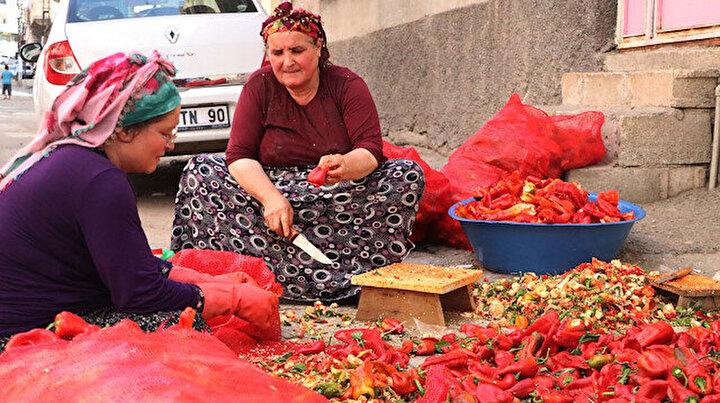 Gaziantepli kadınlar 10 gün boyunca çalışıyor: Salça mesaisi imece usulü bitiriliyor