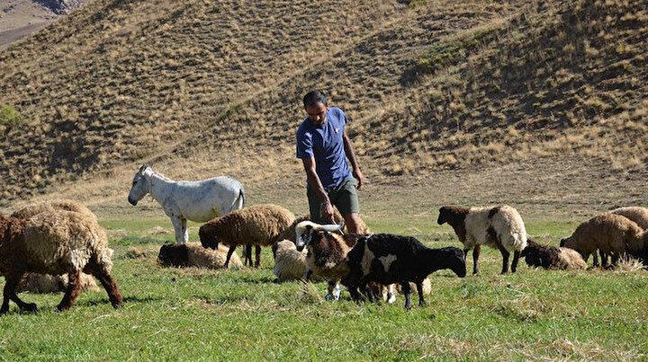 Bir başarı hikayesi: Çobanlıktan milli atlete uzanan öyküsü herkese örnek oluyor