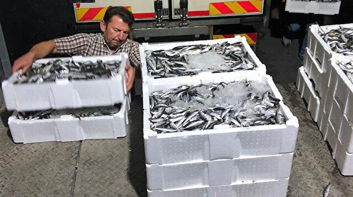 Boy yasağına aykırı avlanan 7 ton istavrite el konuldu