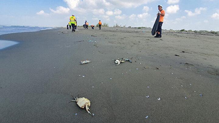 Mersinde yürek yakan görüntü: Kıyıya vurdu